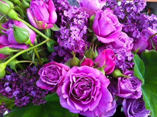 Luscious Cool Water Lavender Colour Garden Roses And Lilac